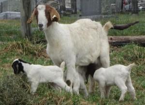Fern + babies