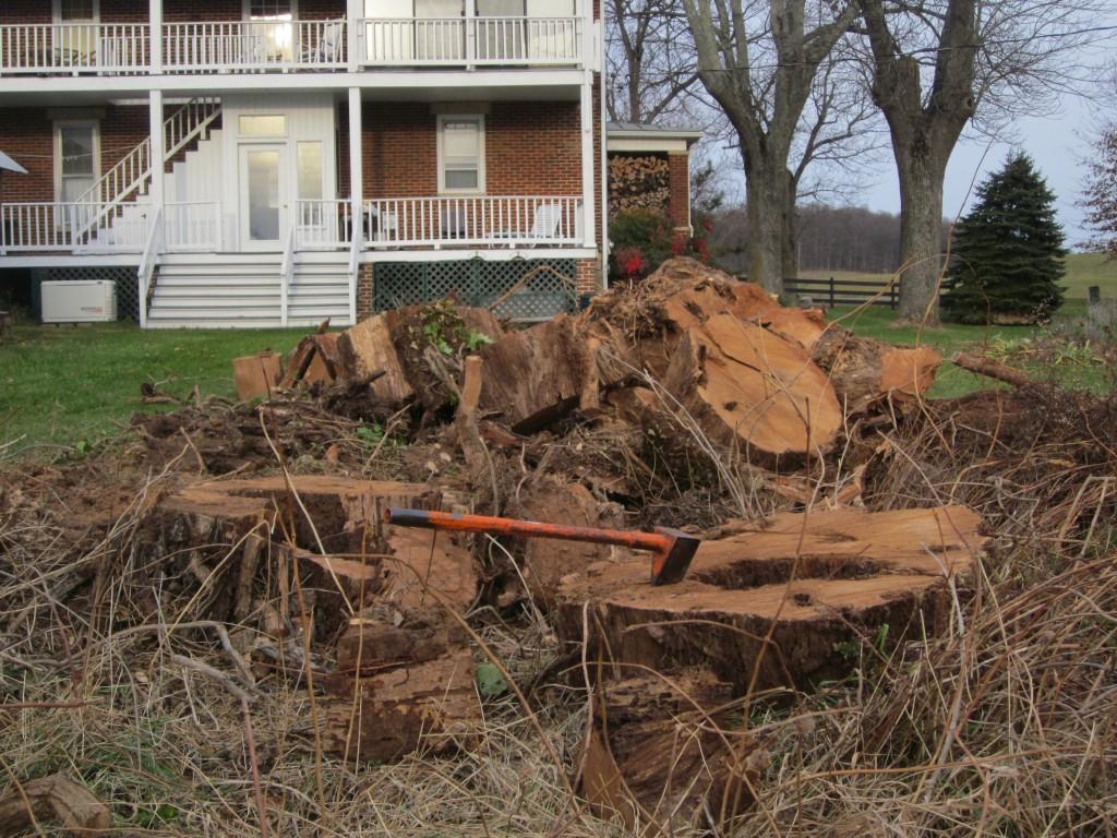 oak-trunk